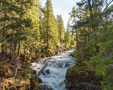 Rogue River-Siskiyou National Forest - Gold Beach, Oregon